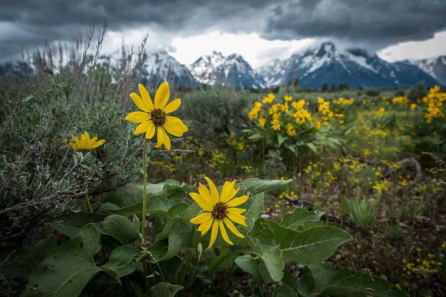 Grand Teton Photo Adventures